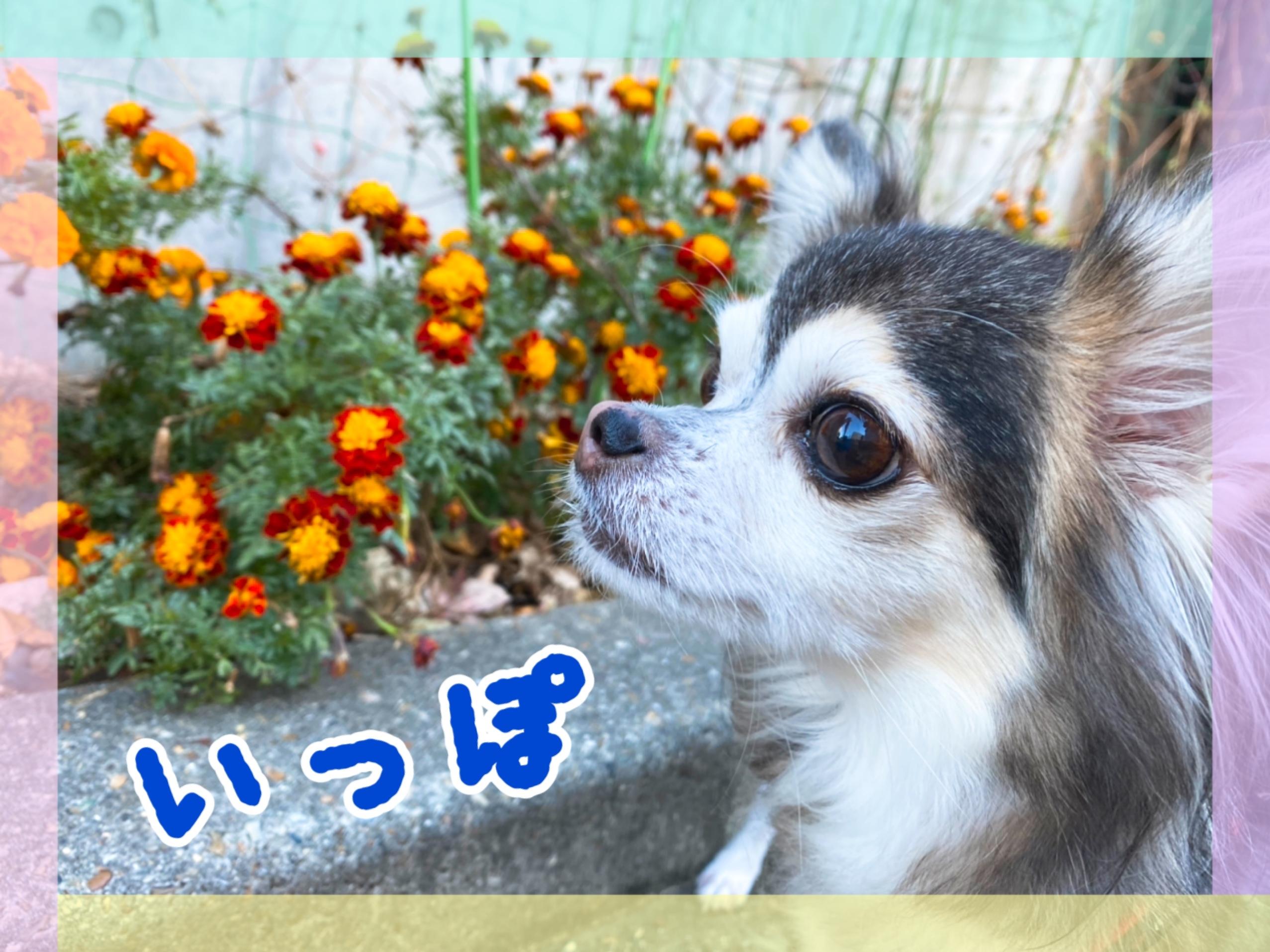 11/24(火)いっぽくん